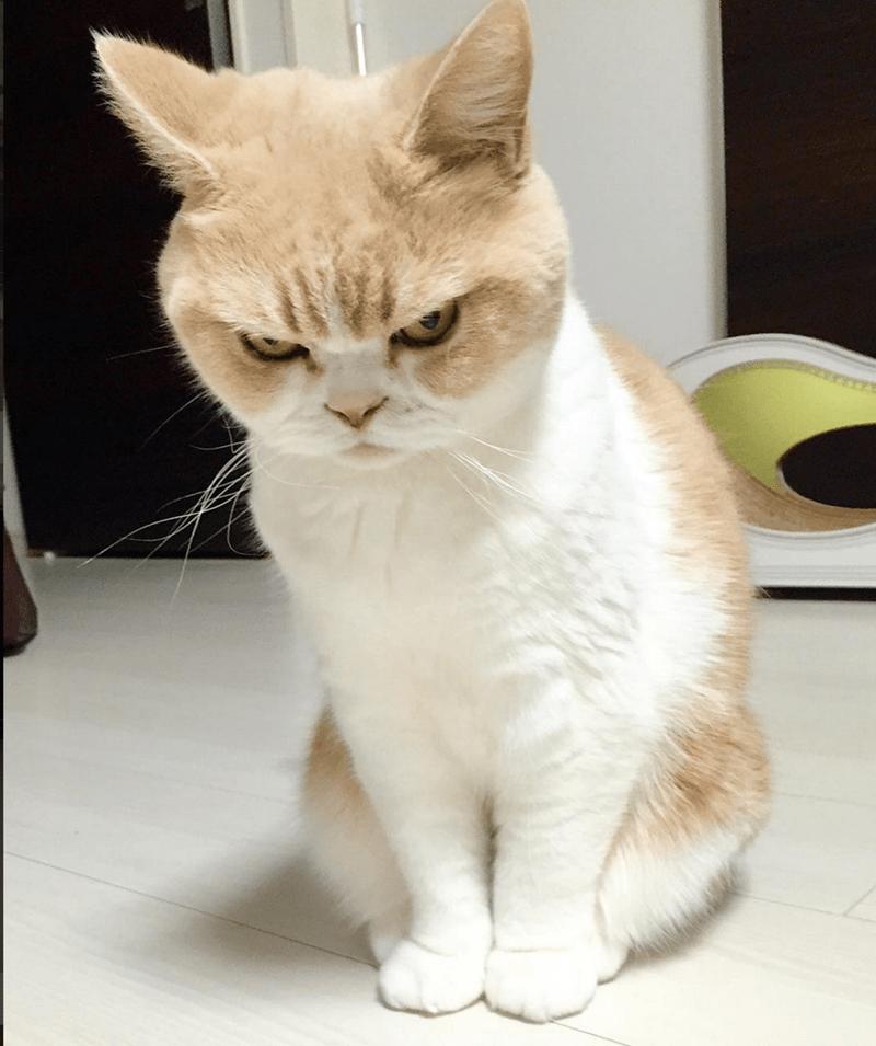 frowning cat - Cat - koyuki