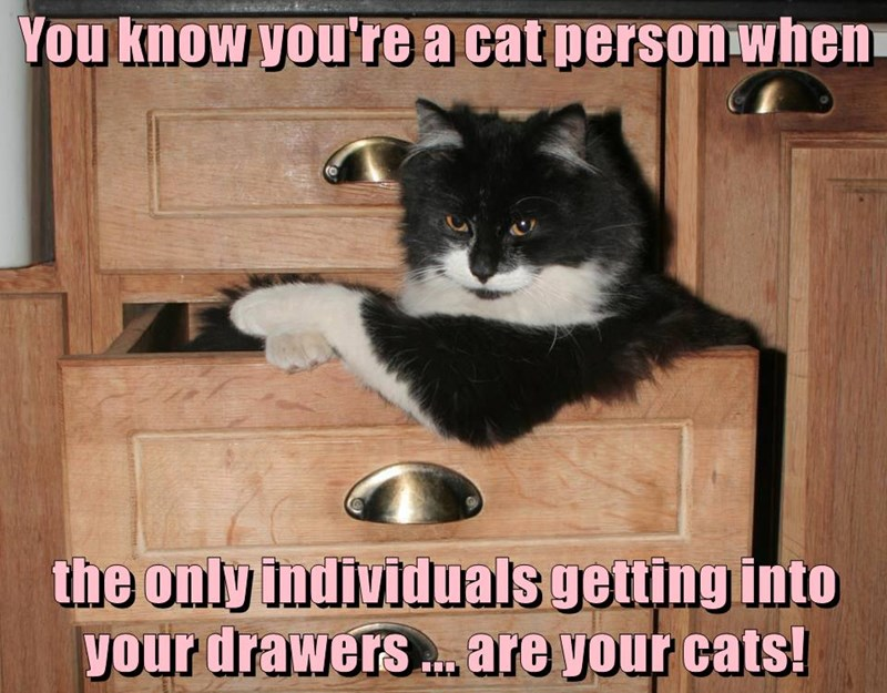 You know you're a cat person when  the only individuals getting into your drawers ... are your cats!