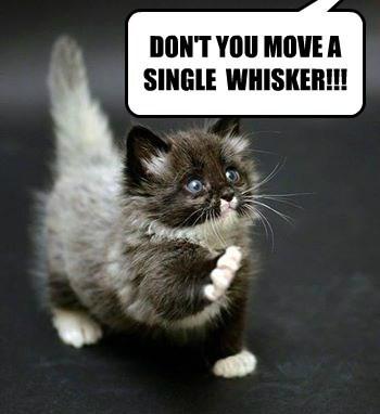 cat kitten - 8751270912