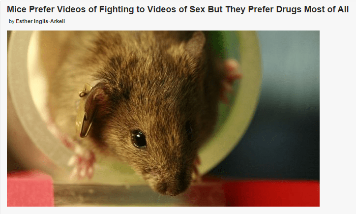 funny headline mice prefer videos of fighting