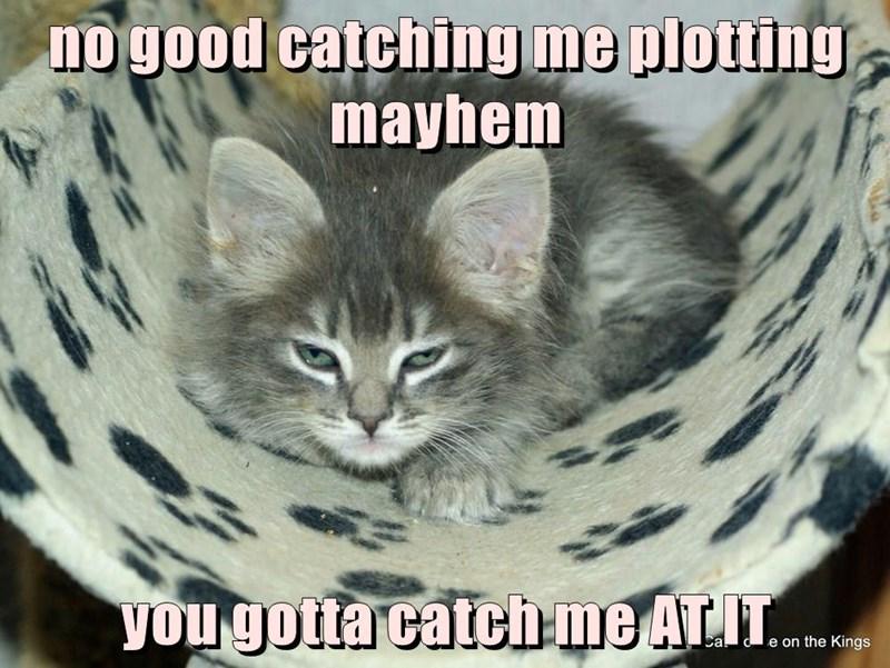 no good catching me plotting mayhem   you gotta catch me AT IT