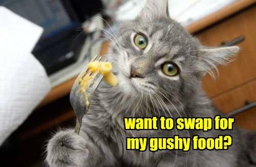 food caption Cats - 8751455744