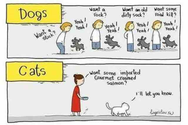 Cats cat people dogs dog people - 8751528704