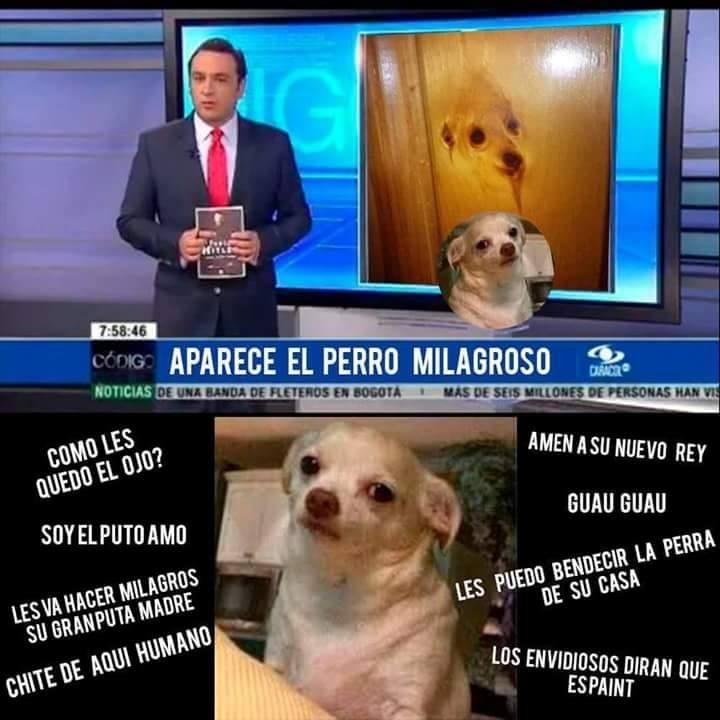perro milagroso