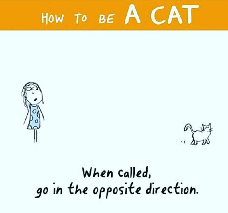guide how to be a cat