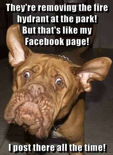 dogs,park,fire hydrant,facebook,caption,removing,page