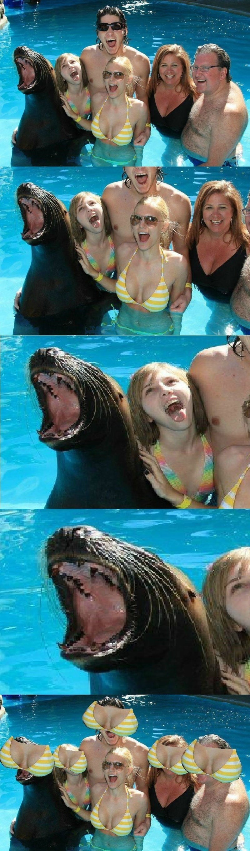 funny memes seal bewbs