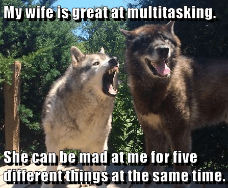animals dogs wife caption - 8751970304