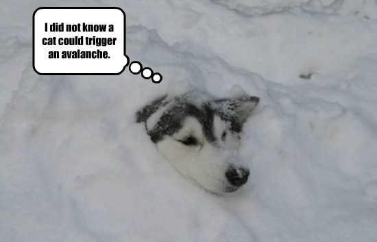 I did not know a cat could trigger an avalanche.