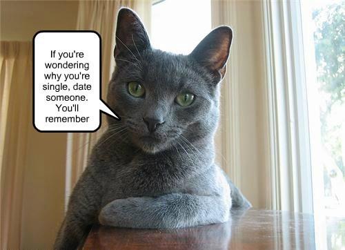 cat single date someone caption remember wondering - 8751976192
