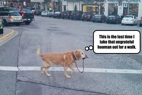 This is the last time I take that ungrateful hooman out for a walk.