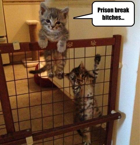 Prison break bitches...