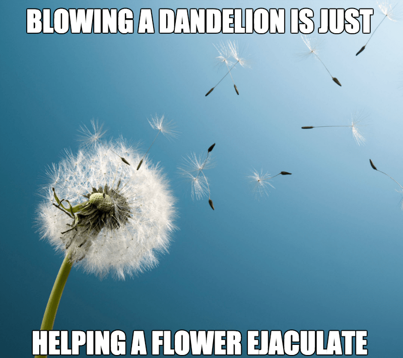 dandelion,that sounds naughty