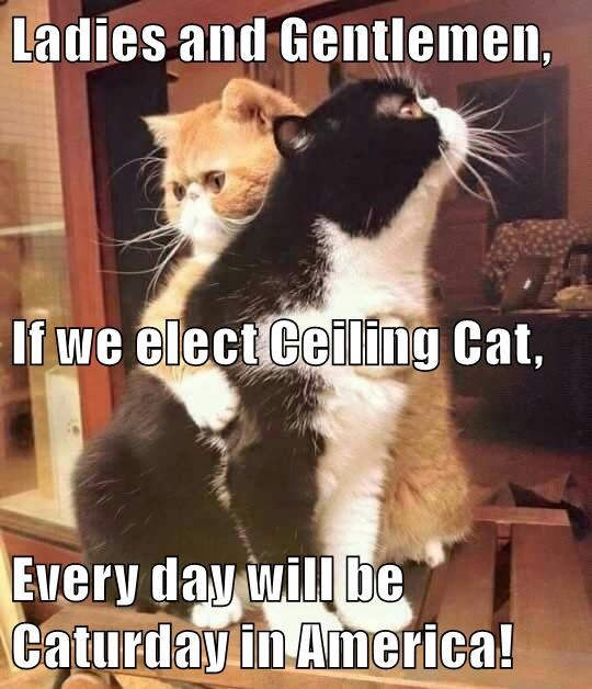 Ladies and Gentlemen, If we elect Ceiling Cat, Every day will be Caturday in America!