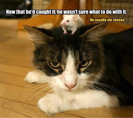 cat caption caught cheese ate usually mouse Sure wasnt - 8752197376