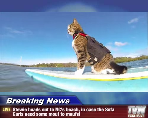 Breaking News - Stewie heads out to NC's beach, in case the Sofa Gurls need some mouf to moufs!