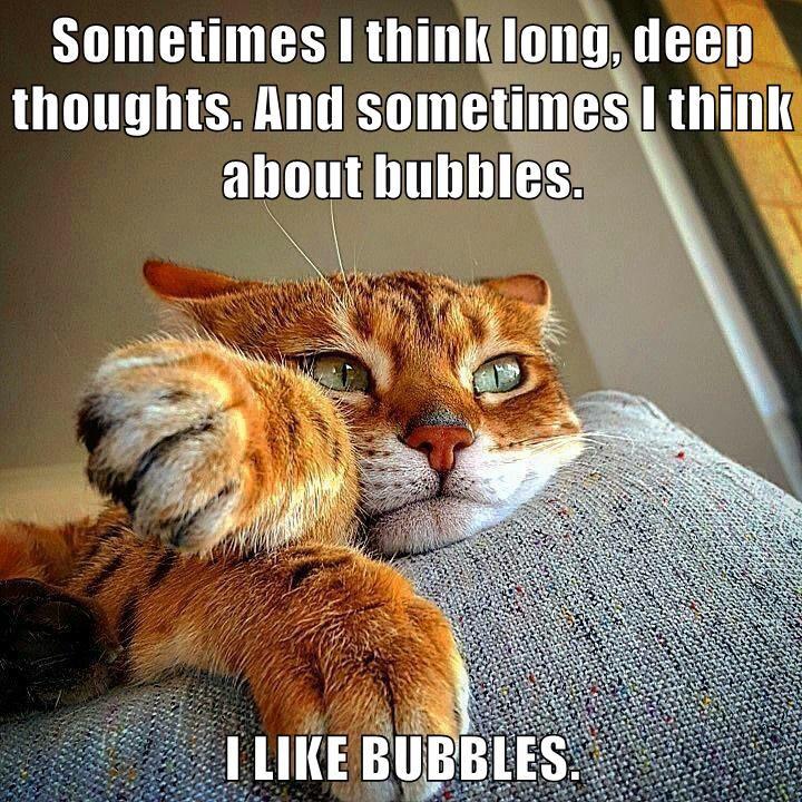 animals cat thoughts long deep bubbles caption - 8752335104