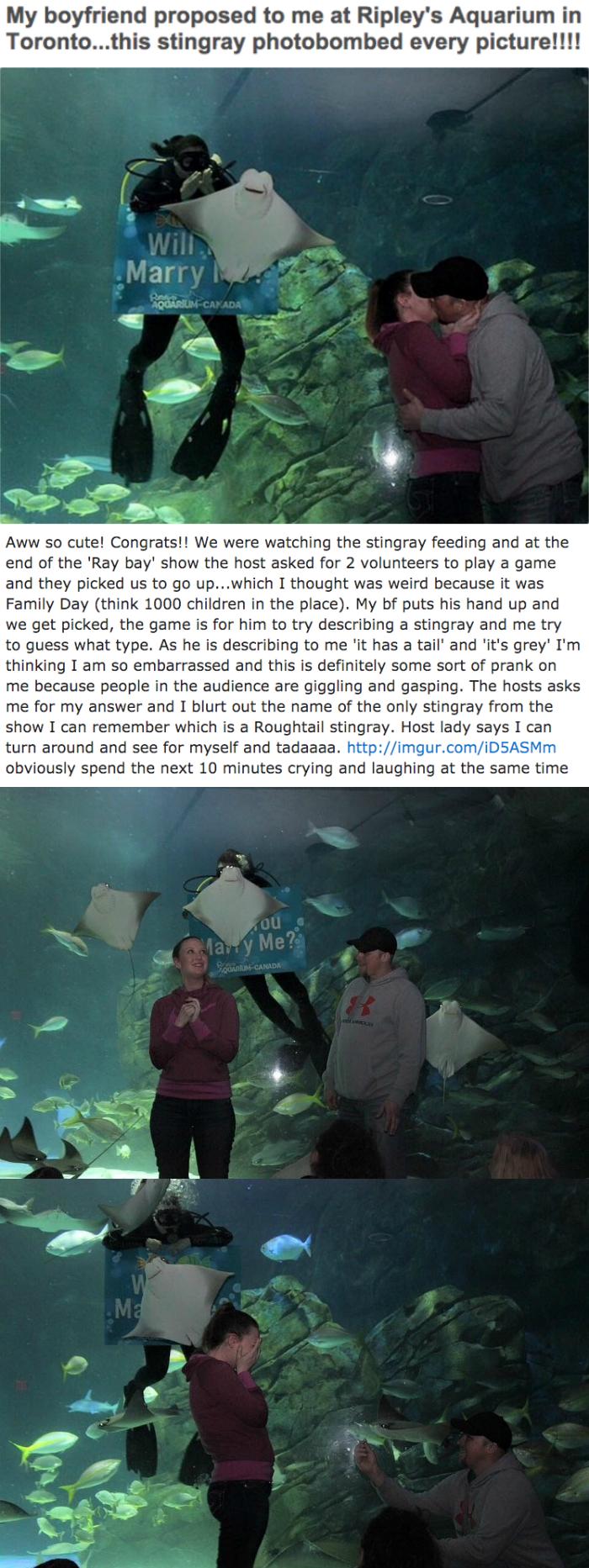 funny dating image stingray photobombs engagement proposal at aquarium