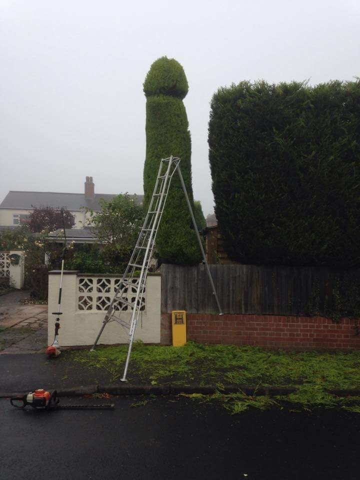 funny win image landscaper gets revenge for unpaid bill with perfectly symbolic bush