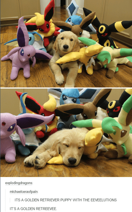 dogs eeveelutions cute - 8752596224