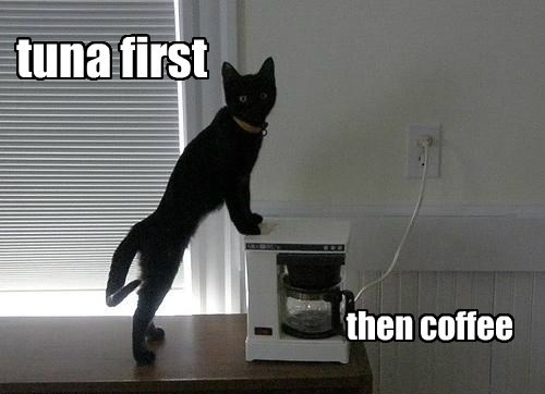 Tuna First.....THEN Coffee, Priorities, Priorities