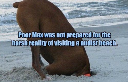 Poor Max was not prepared for the harsh reality of visiting a nudist beach.