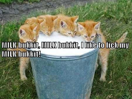 animals like milk lick kitten bukkit caption - 8752851712