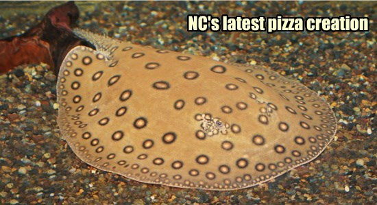 NC's latest pizza creation