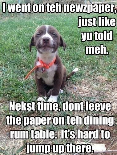 dogs puppies caption newspaper - 8753386240