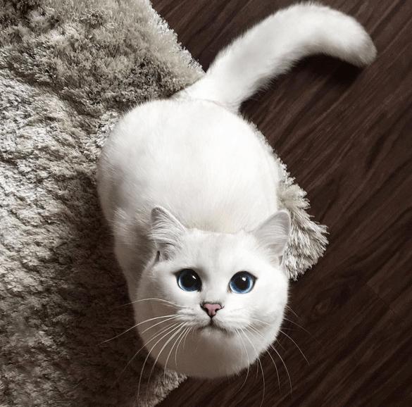 coby the cat - Cat