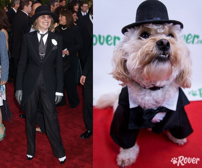 dogs,fashion,oscars