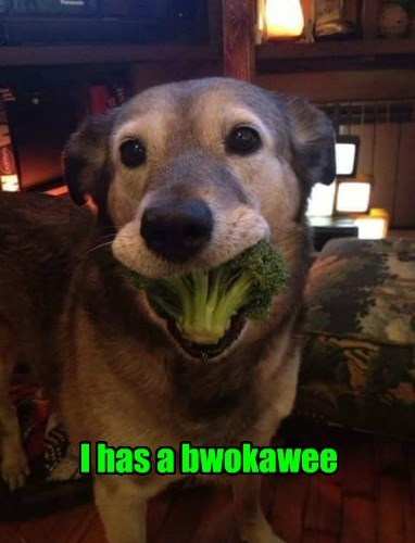 dogs,broccoli,caption