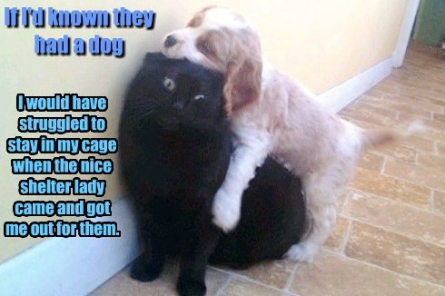 dogs stay cage caption known - 8753815296