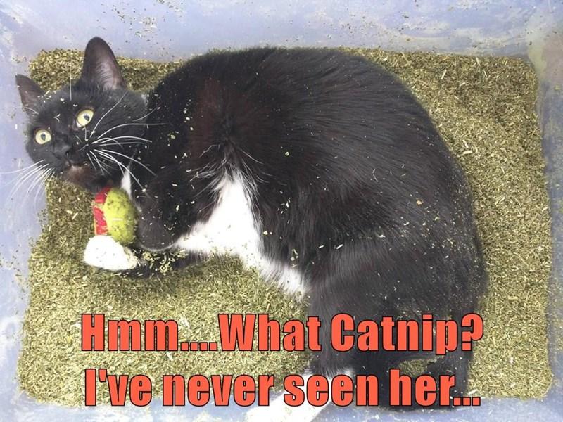 Hmm....What Catnip?               I've never seen her...