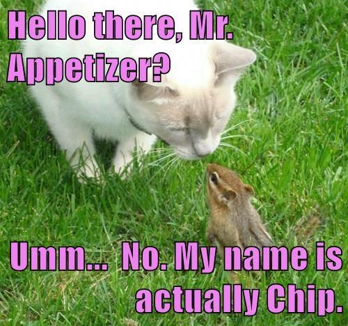 animals chipmunk caption Cats - 8753856512