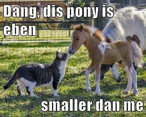 Dang, dis pony is eben   smaller dan me
