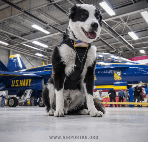 dogs,job,airport,piper