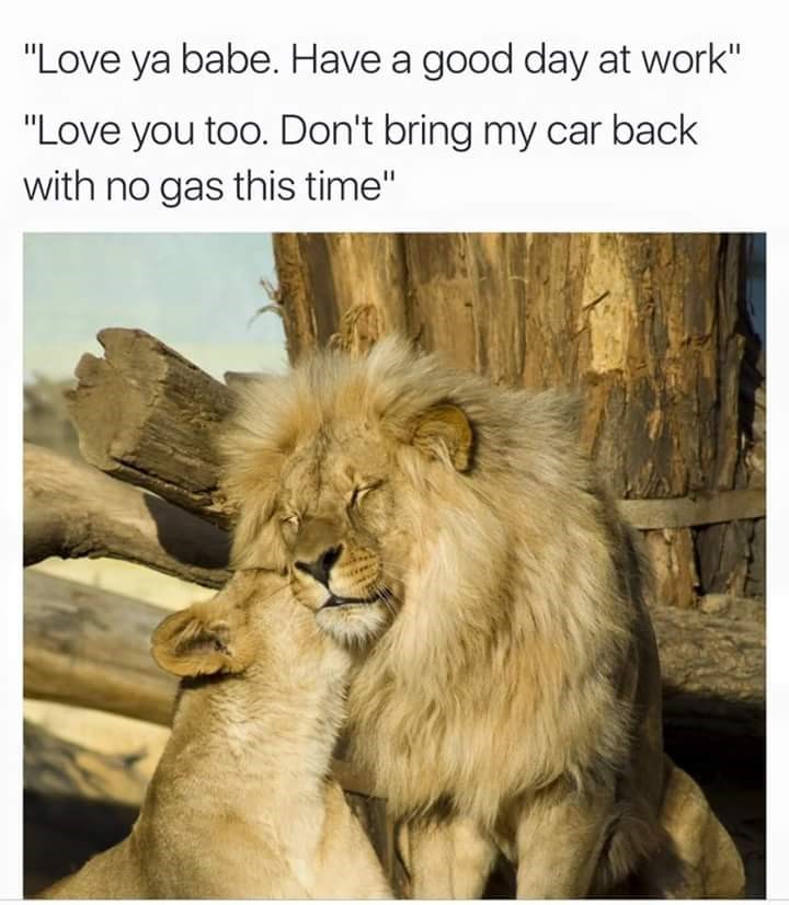 """Lion - """"Love ya babe. Have a good day at work"""" """"Love you too. Don't bring my car back with no gas this time"""""""