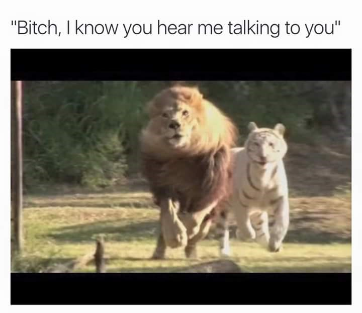 """Mammal - """"Bitch, I know you hear me talking to you"""""""