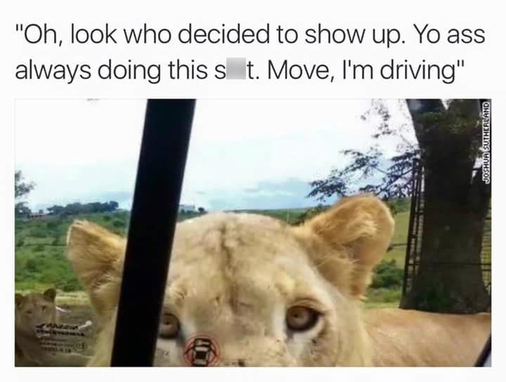 """Lion - """"Oh, look who decided to show up. Yo ass always doing this s t. Move, I'm driving"""" JOSHUA SUTHERLAND"""