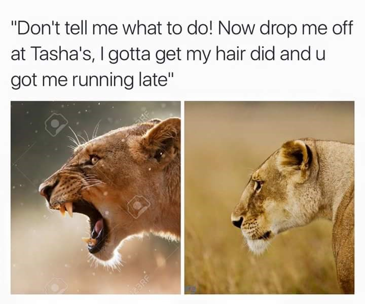 """Wildlife - """"Don't tell me what to do! Now drop me off at Tasha's, I gotta get my hair did and u got me running late"""" RF BRF"""