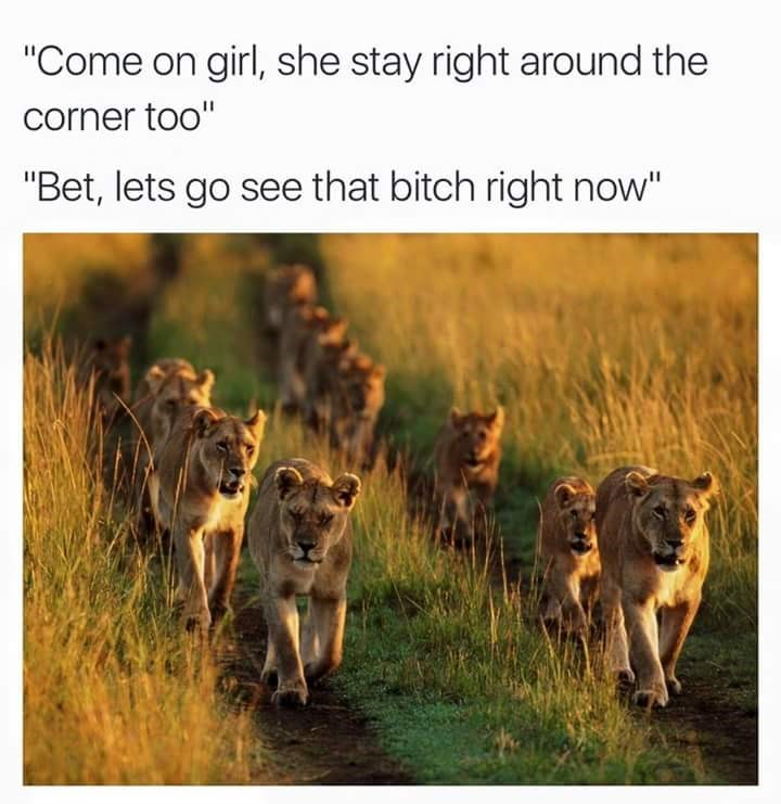 """Wildlife - """"Come on girl, she stay right around the corner too"""" """"Bet, lets go see that bitch right now"""""""