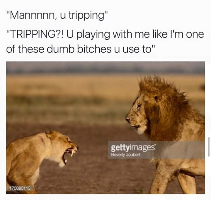 """Lion - """"Mannnnn, u tripping"""" """"TRIPPING?! U playing with me like I'm one of these dumb bitches u use to"""" gettyimages Beverly Joubert 170080115"""
