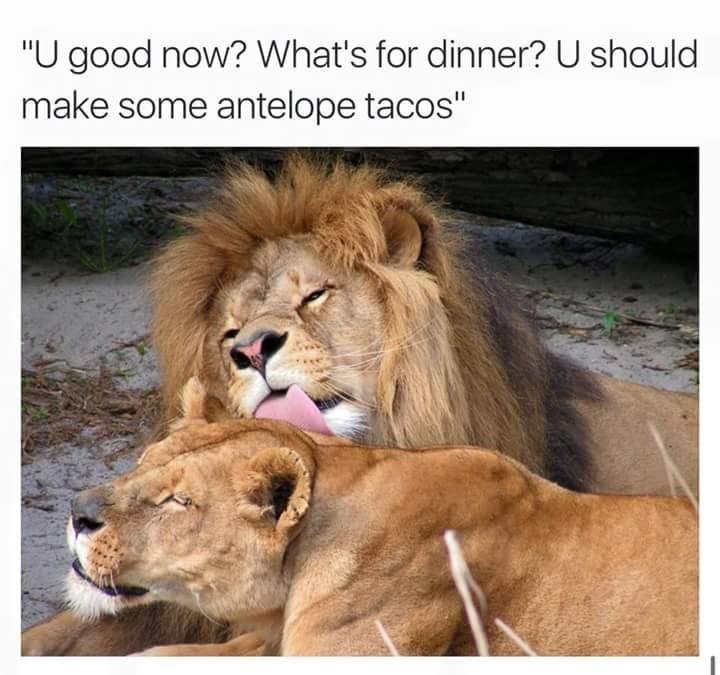 "Lion - ""U good now? What's for dinner? U should make some antelope tacos"""