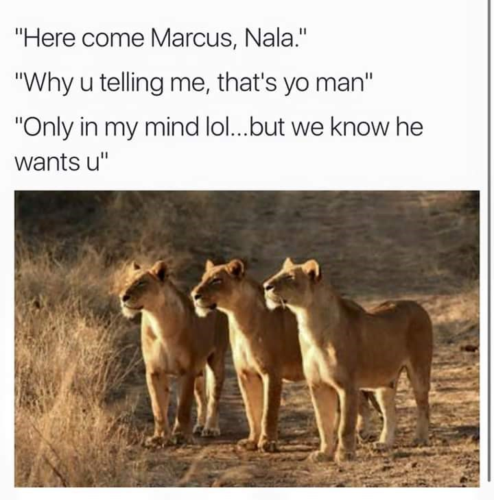 """Wildlife - """"Here come Marcus, Nala."""" """"Why u telling me, that's yo man"""" """"Only in my mind lol...but we know he wants u"""""""