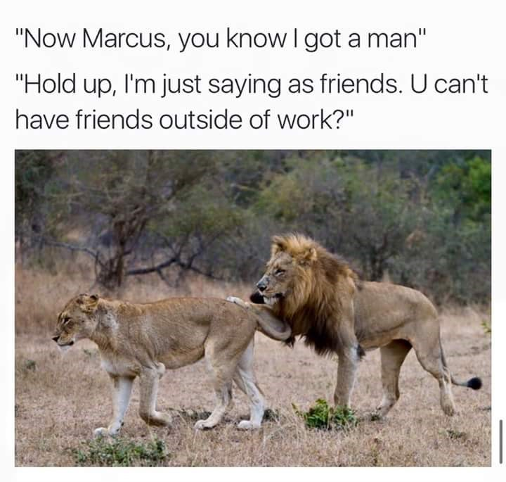 """Wildlife - """"Now Marcus, you know I got a man"""" """"Hold up, I'm just saying as friends. U can't have friends outside of work?"""""""