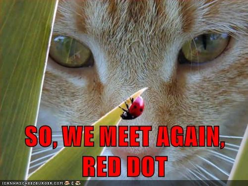 cat,red dot,caption