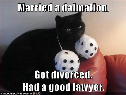 dalmation,caption,Cats