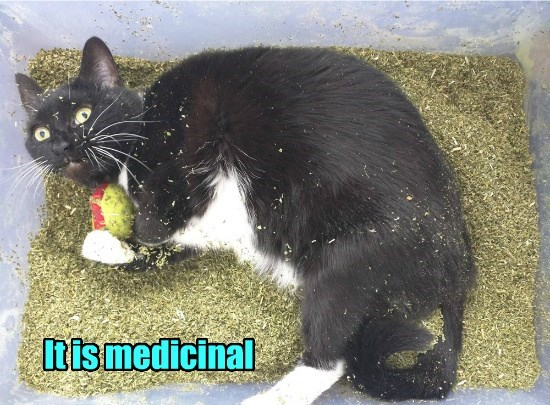 caption Cats weed