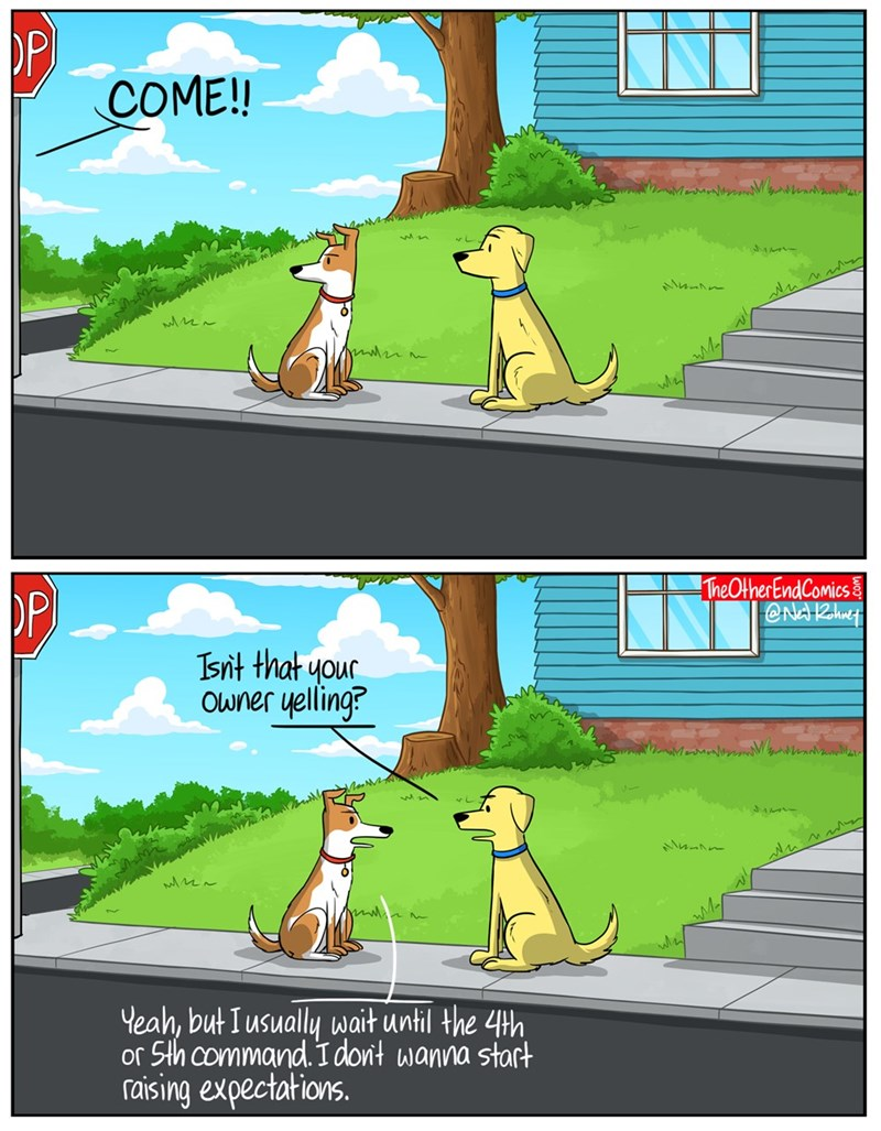 expectations dogs web comics - 8754186752